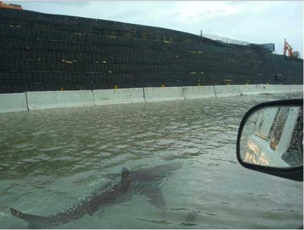 Picture about Shark Swimming in Flooded Street After Hurricane Irene