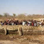 Picture about World's Largest Crocodile