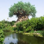 Picture about A Mysterious Tree in Nalgonda, Andhra Pradesh, India