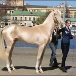 Picture about Most Beautiful Horse in the World