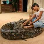 Picture: Nine years old Boy Pets a 5 meter long Python Snake