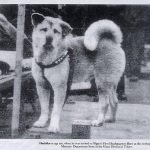 Picture of Faithful Dog Waits 9 Years for his Dead Master