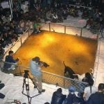 About Photo of Heineken Posters at a Dogfighting Event