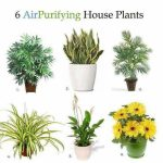Picture Showing 6 Air Purifying House Plants