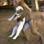 Picture about Monkey Saves a Puppy from an Explosion Site