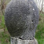 Picture about The Living and Growing Stones of Romania