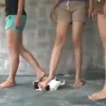 Picture of 3 Girls Stomping a Puppy to Death