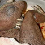 Picture about 200 Million Year Old Dinosaur Egg Hatches in Berlin Museum