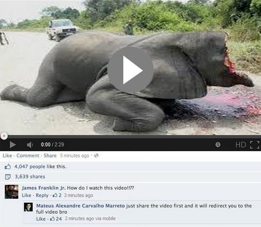 Picture of Live Shocking Footage of an Elephant Head Broken by Explosive Mines, Scam