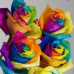 Picture of Multicolored Rainbow Roses, a New Breed