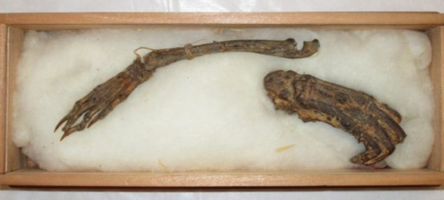 Picture about 'Remains' of Mythological Kappa to Go on Show in Japan