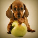 Picture about Common Foods That Can Kill Your Pets