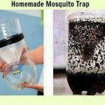 Picture about DIY Homemade Mosquito Trap