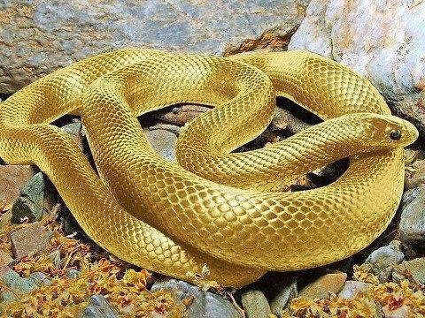 Picture about 24 Carrot Pure Gold Snake in Amazon Forest