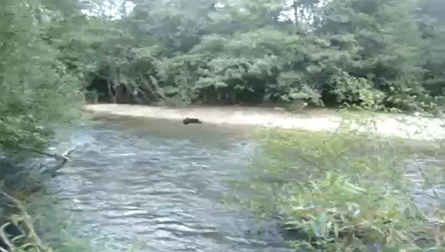 Video Of Girl Throwing Puppies Into River3 Hoax Or Fact