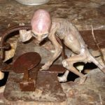 Picture Suggesting Baby Alien Found in Mexico Farm