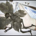 Picture Suggesting Mummified, Dead Fairy Found in Derbyshire