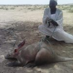Picture Suggesting Giant Rat Discovered by Sudan Locals