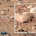 Image of Squirrel/Rodent/Lizard on Mars Pictures of Curiosity Rover